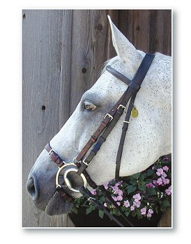 Nunn Finer Adjustable Lever Noseband picture