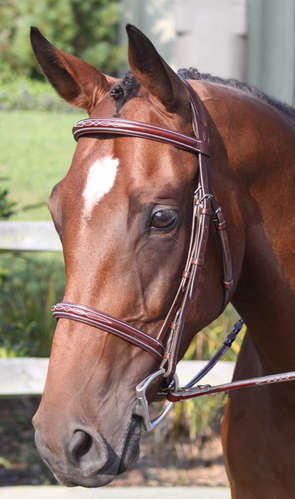 The Ravenna Bridle picture