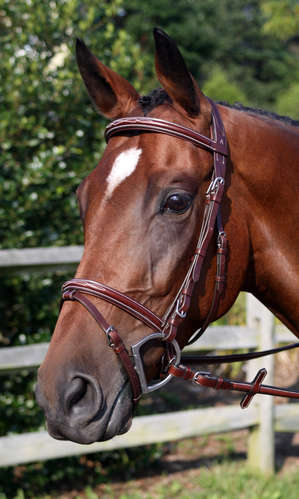 The Modena Bridle picture