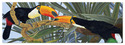 Toucan Kiss Cardboard Jigsaw Puzzle - 100 Pieces