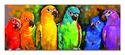 Parrot Rainbow Cardboard Jigsaw - 1000 Pieces