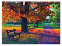 Walk in the Park Cardboard Jigsaw - 1500 Pieces