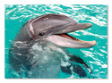 Smiling Dolphin Cardboard Jigsaw - 60 Pieces