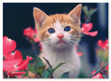 Curious Kitten Cardboard Jigsaw - 30 Pieces