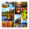 Autumn Snapshots Cardboard Jigsaw - 1000 Pieces