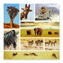 Safari Shapshots Cardboard Jigsaw - 1000 Pieces