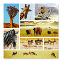 Safari Shapshots Cardboard Jigsaw - 1000 Pieces