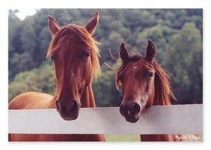Horse Corral Cardboard Jigsaw - 100 Pieces