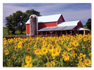 Sunflower Farm Cardboard Jigsaw - 300 Pieces