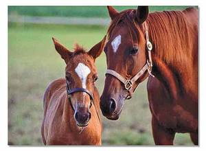 Mare & Foal Jigsaw Puzzle - 60 Pieces