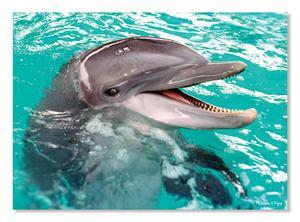 Smiling Dolphin Cardboard Jigsaw - 60 Pieces