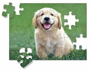 Golden Retriever Puppy Jigsaw Puzzle - 30 Pieces