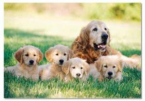 Golden Retriever with Puppies Jigsaw Puzzle - 100 Pieces