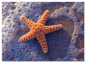Sun-Kissed Sea Star Cardboard Jigsaw - 300 Pieces