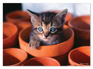 Flowerpot Kitten Cardboard Jigsaw - 60 Pieces