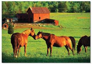 Kissing Horses Jigsaw Puzzle - 200 Pieces