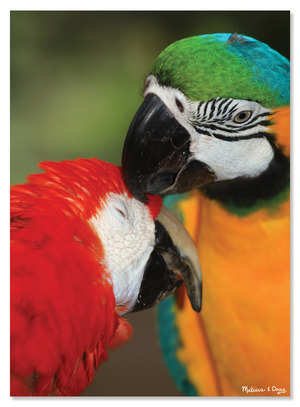 Parrot Pals Cardboard Jigsaw - 300 Pieces