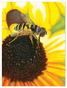 Sunflower Snack Cardboard Jigsaw Puzzle - 100 Pieces