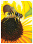 Sunflower Snack Cardboard Jigsaw Puzzle - 100 Pieces