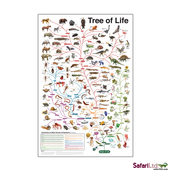 Tree of Life Non Laminated Poster picture