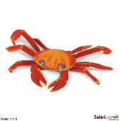 Incredible Creatures <br> Galapagos Sally Lightfoot Crab