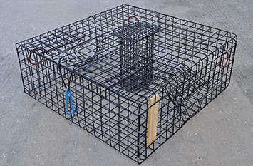 Vinyl Coated Stone Crab Traps picture