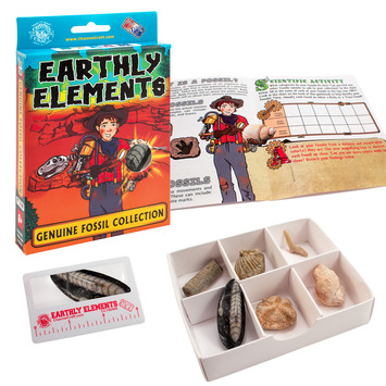 Earthly Elements - Real Fossil Collection picture